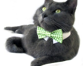 Dog/Cat green gingham necktie/bowtie on a shirt style collar