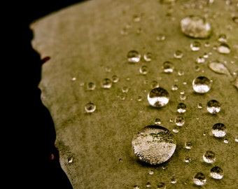 Nature Photography, Water Drop, Macro, Green, Black, fPOE, Velvet Dewdrops