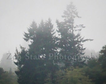 Rain Forest Nature Print Wall Art. Foggy Morning Rainforest Photo Nature Photograph. Unframed Photo Print, Framed Photography, Canvas Print.