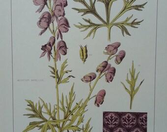 Botanical Print Monk's Hood 1874 F Edward Hulme Original Antique Victorian Print RARE Flowers Plant