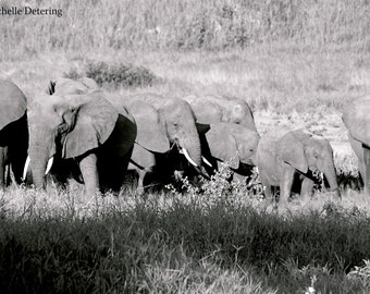 Elephant Family- Elephant Photography, Elephant Art Print, Elephant Wall Decor, Black and White Elephant Art, Elephant Decor, Elephant Photo