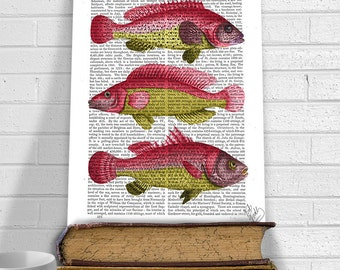 Red & Yellow Fish - Fish print nautical print beach house decor kitchen art print kitchen decor fish art fathers day fishing decor cabin art