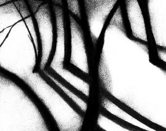 The Path.  8 x 10 Fine Art Print.