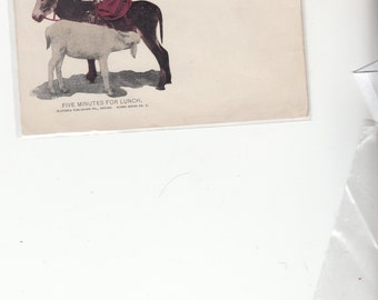 Undivided Antique Postcard Pretty Girl On Donkey While Goat Takes 5 Minutes For Lunch