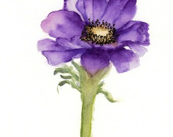 Purple Anemone -  Watercolour Painting - Fine Art Prints  and Greetings Cards