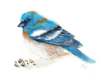 Bluebird watercolor painting. Art Print. Nature or Bird Illustration, Blue and Orange.