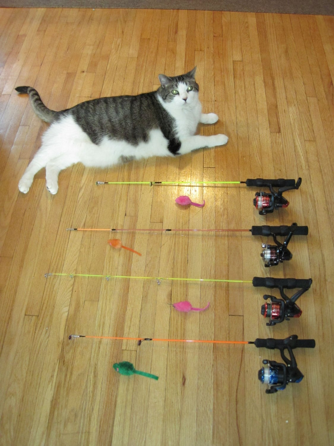 Cat toy fishing pole the most fun interactive cat toy ever for Cat toy fishing pole