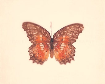 Butterfly, art prints, orange, modern wall art, nature photography, minimalist, nursery decor, butterfly photo, garden art, Spring, decor