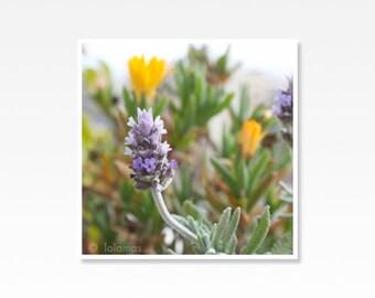 Lavender print, flower photography, botanical art, Lavender Decor, Purple Floral Decor