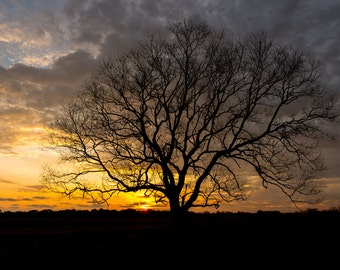 Sunset Photography, Darkness Falls, Alabama Photography, Tree at sunset photo, Landscape Photography, Fine Art Landscape Photography