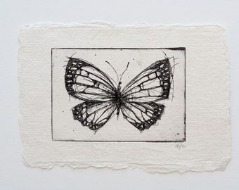 butterfly 02 - original handpulled etching - insect - illustration