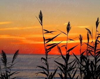 Beach Grass at Sunrise