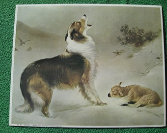 "Vintage Print Collie & Lamb Titled "" Found"" 1960's Issue Little Lost Lamb in Snowstorm by Walter Hunt"
