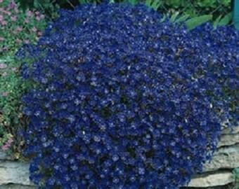 100 Seeds Rock Cress Cascading Blue (PERENNIAL)