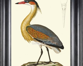 Bird Art Print HU89 Beautiful Large Antique Whistling Heron Lake Nature Home Room Wall Decor to Frame Natural Science Interior Design