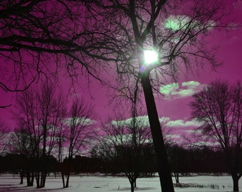 Purple Winter Sky