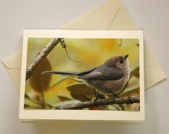 Stanley Park Bushtit - Blank Photo Greeting Card