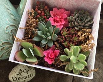 """Succulent Gift Box Pink Tulip Collection. Six 2.5"""" Premium Succulents in Cute Love You Floral Box - La Fleur Succulente"""