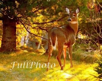 Nature Deer Photography - Wild Animal Photography - Nature Photo - Fall Autumn Decor - Hunter Gift - Wall Art - Office