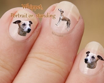 Whippet Nail Art, Dog Nail Art Stickers, Nail Stickers, Fingernail Stickers, hound, portrait, standing, Decals, photographic nail art