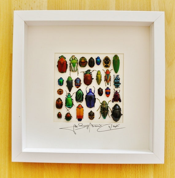 Artframe with real insects : Topquality display with mixed metallic beetles
