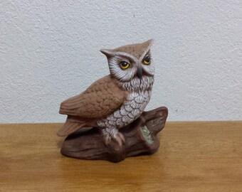 Horned Owl on Log