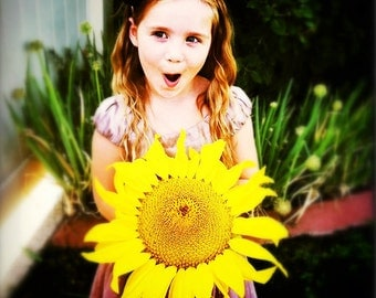 GIANT SUNFLOWER SEEDS - (25) Organic Mammoth Sunflower Seeds