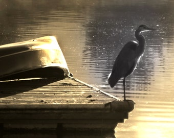 Egret Bird Photograph