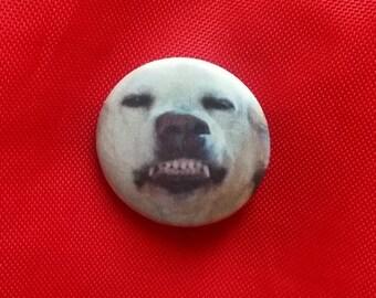 "Denver the Guilty Dog 1"" Pin"