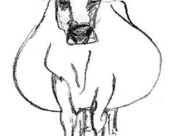 Fat Cow - A6 Greeting card of original line drawing of a Jersey cow