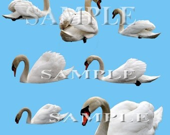 Swan overlays Digital PNG files