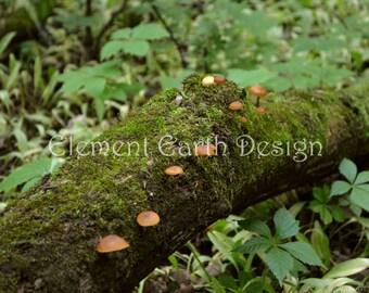 Mossy Log Mushrooms, Instant Download, 10x8, Digital Printable, Fine Art Digital Photo, Photography, woods, forest, woodland