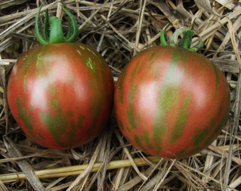 Violet Jasper  Heirloom Tomato Seeds, Naturally Grown in the Pacific NW