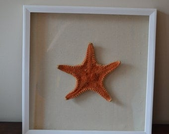 Genuine Starfish Shadowbox Frame Nautical Ocean Beach