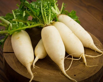500 Radish White Icle Seeds, NON-GMO + Free Gift