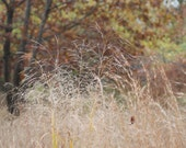 Fall Meadow Landscape Tacony Creek Nature Park Trail Hiking Plant Fine Art Photograph