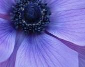 purple flower photo, purple flower closeup, purple decor, purple wall art