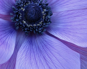 purple flower photo, purple flower closeup, purple decor, purple wall art