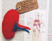 Biology Love Note, I Love You With All of My Spleen, Anatomy Love Note