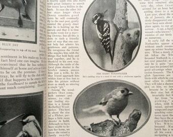 Nature Magazine - February 1925