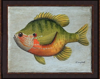 Pumpkinseed Giclee Print by Tim Campbell