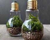 Light Bulb Plant Terraium for Industrial Decorating