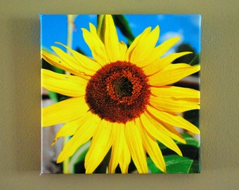 Sunflower 8x8 Canvas Wrap