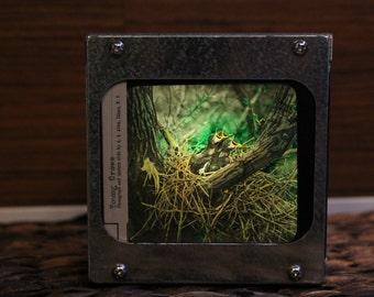 YOUNG CROWS - Vintage magic lantern glass slide light box