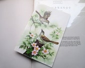 Vintage Card * Bird Illustration * Nature Card