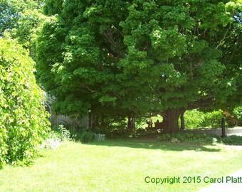 Highland Park Flower Conservatory - Side Door Digital Photo