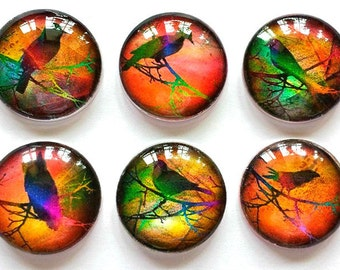 Magnets - Bright Birds - Necklace Cabochon Supplies - Set of 6 - 1 Inch Domed Glass Circles with or without magnets