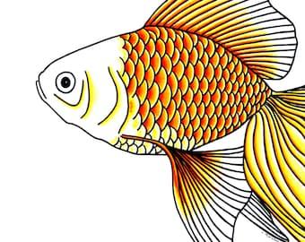 Goldfish Head 8x10