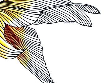 Goldfish Tail 11x14