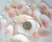 Beach Decor Shells - Beach Wedding Seashells - Pink Tellin Sea Shells - Beach Wedding Shells - Beach Wedding Decor - Beach House Decor -24PC